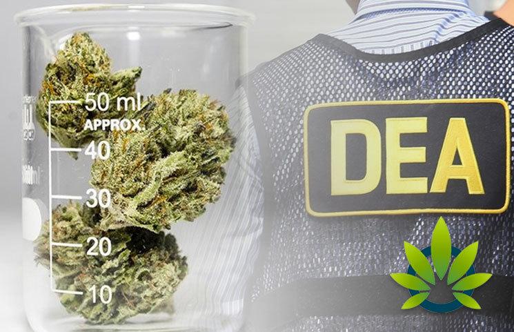 UC Davis (UCD), Biopharmaceutical Research Company (BRC) to Analyze Cannabis Profiles for US DEA