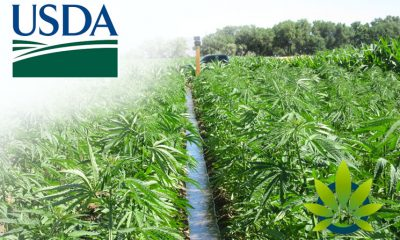 USDA: Hemp Farmers Can Purchase Federal Crop Insurance for Next Year's Planting Session