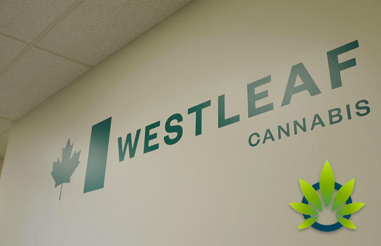 Westleaf Moves Upstream into the Cannabis Extraction Business with Xabis Deal