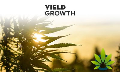 Yield-Growth-to-License-6-CBD-Product-Formulas-to-Melorganics-for-Europe-Market