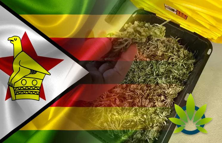 Zimbabwe-May-Export-Hempp