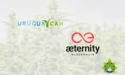 Aeternity Will Track Medical and Recreational Cannabis by Uruguay Can via Blockchain