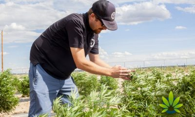All Eyes Are on the USDA As Public Waits for Regulations for Industrial Hemp Production
