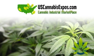 Cannabis Chicago 2019 Expo is the Largest Marijuana Business Expo in the Midwest