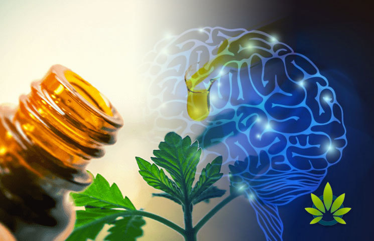 New UNC School of Medicine Research: CBD May Alleviate Seizures, Neurodevelopmental Conditions