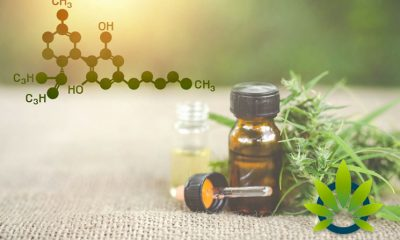 Clearing Up the CBD Misconception Regarding Fatigue and Drowsy Effects