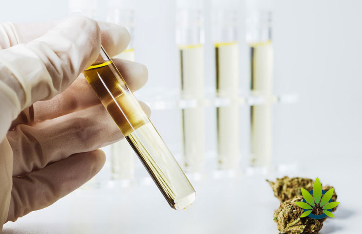 CBD Use in Resort Spa Hotel is Soaring: Some Notable and Desired Factors Why