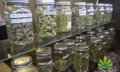California's Unlicensed Cannabis Market Three Times as Big as Legal Market, UCBA Claims
