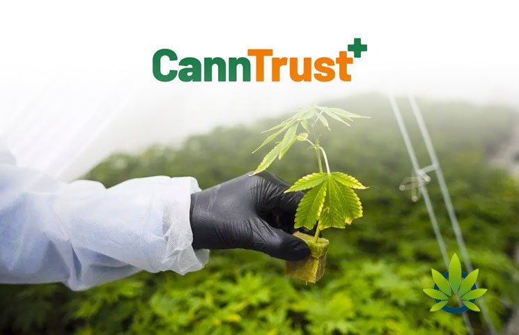 CannTrust Shares Details About License Suspension Notice