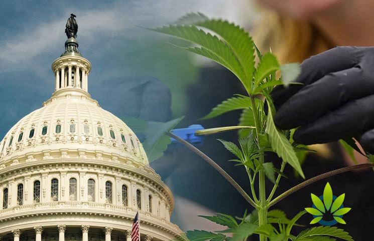 Cannabis Advocates Dissatisfied with Key Committee Chair Regarding Marijuana Justice