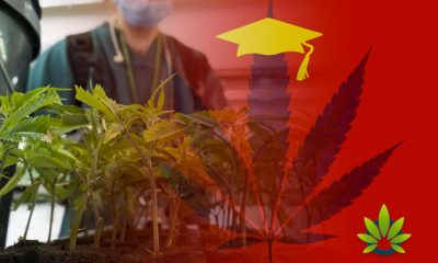 Cannabis-Courses-and-Marijuana-Research-Increases-in-US-Universities