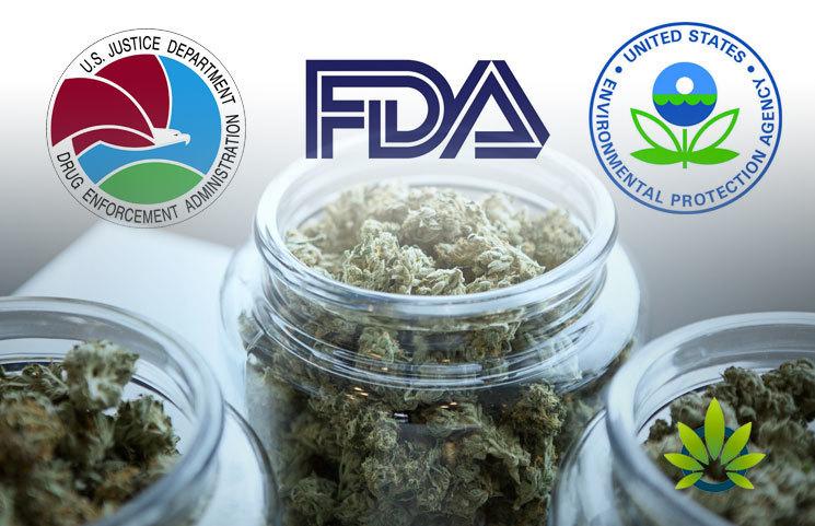 Cannabis Legalization on Purview of Three Federal Agencies (DEA, FDA, EPA)