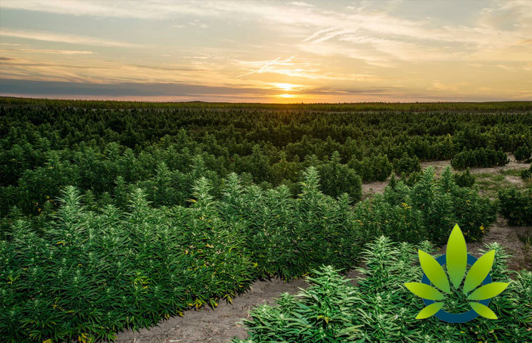 Charlotte's Web CEO: Hemp Crop Sustainability, Uses Can Drive Farming's Future