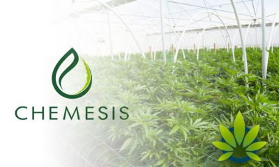 Chemesis International Attains Puerto Rico License for CBD Cultivation and Production