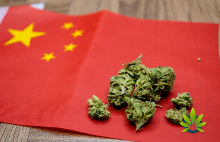 China Is Confident in CBD Industry's Potential to Skyrocket