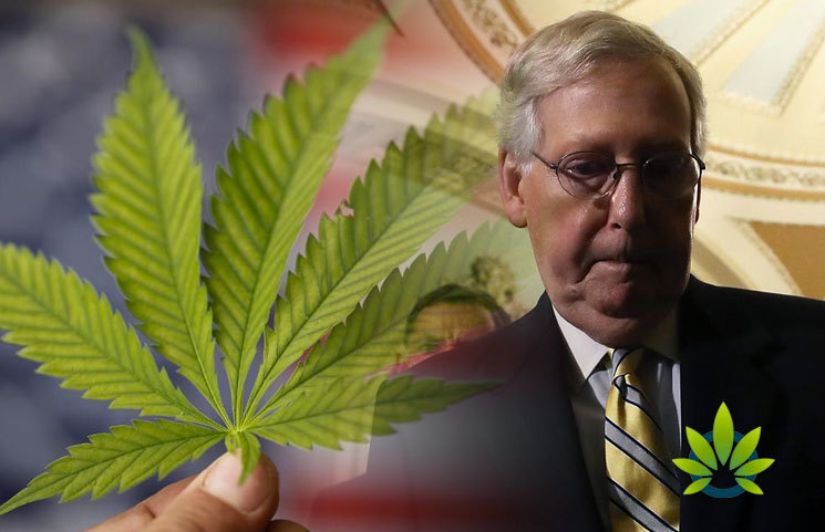 DEA-Needs-to-Decide-How-to-Distinguish-Hemp-from-Marijuana-Says-Senate-Majority-Leader