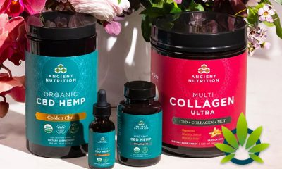 Dr. Axe and Ancient Nutrition Debut New Organic Hemp CBD Products