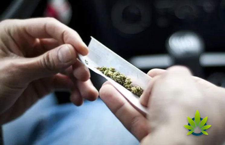 Dunedin Study Reveals the Long-Term Effects of Early Marijuana Use