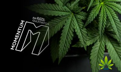 Eaze-and-Partners-Announce-Launch-of-Cannabis-Business-Accelerator