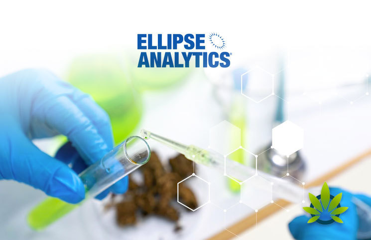 Ellipse-Analytics-Tests-Over-250-Popular-CBD-Products-and-Whopping-45-Contains-THC