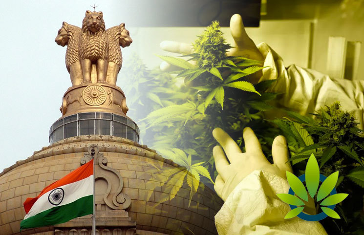 Indian Government, CIMAP and Finance Ministry Green Light Cannabis Seed Oil Research