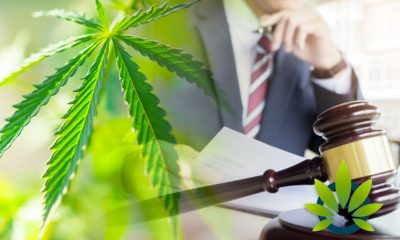 Government's New Cannabidiol and Marijuana Research Expansion Act Will Boost CBD Clinical Studies