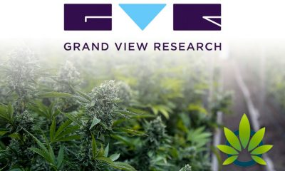 Grand View Research Report: Cannabis Cultivation Market to be Worth $45.4 Billion in Next 7 Years