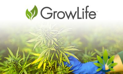 GrowLife Enters $2.5 Million Deal Allowing Them to Include CBD-Rich Hemp Clones as Offerings
