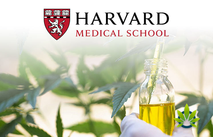 Harvard Medical School Professor Attempts to Shed Light on Legal Cannabis Dangers