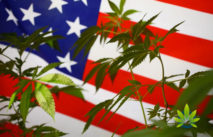 How Can the Public Help with Cannabis Reform and End the Federal Cannabis Prohibition?