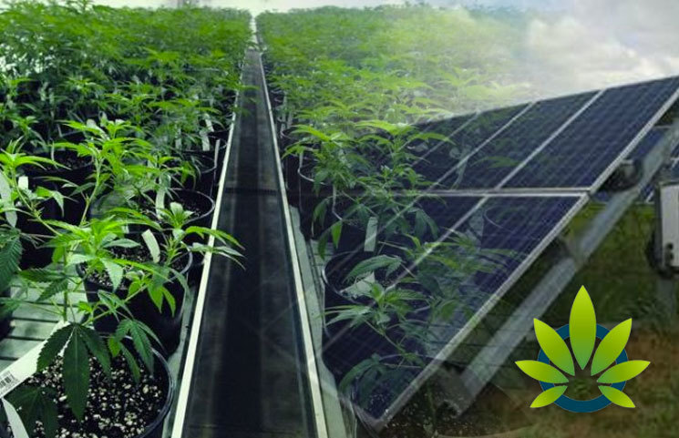 Illinois Energy and Water Use Standards for Cannabis Cultivation Set to Pioneer Midwest Market