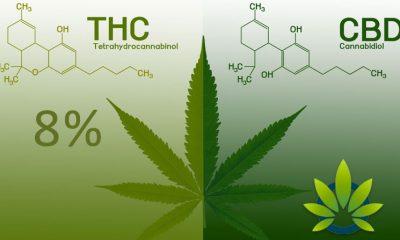 thc-free cbd oils vs no-thc cbd
