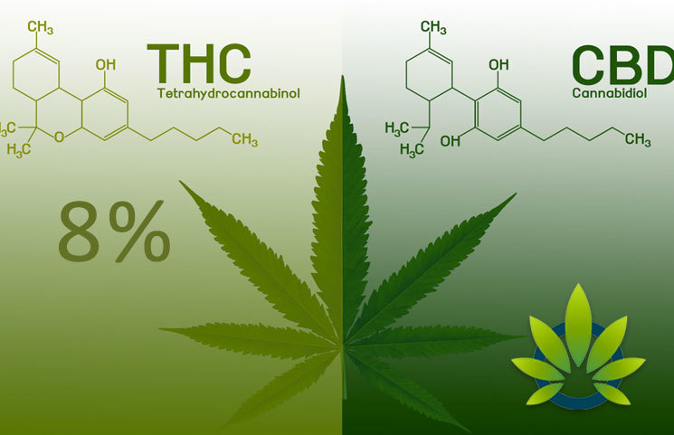 thc-free cbd oils vs no-thc cbd