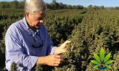 Is Kentucky's Hemp Industry Strong Enough to Overcome Tobacco Crops?