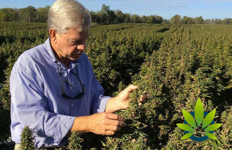 Is Kentucky's Hemp Industry Strong Enough to Overcome