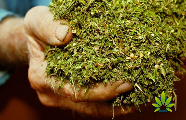 Kentucky to Accept Hemp Cultivation and Processing Applications on Nov. 15