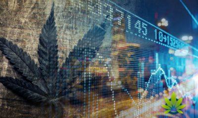 Key-Catalysts-Look-to-Boost-the-Next-Cannabis-Stock-Market-Bull-Run