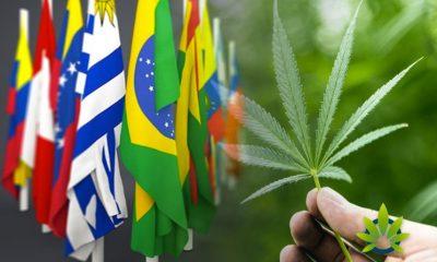Latin-America-CBD-Outlook-in-Colombia-Brazil-Chile-Mexico-Peru-and-Argentina