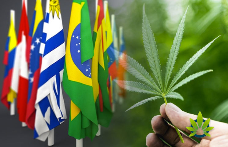 Latin-America-CBD-Outlook-in-Colombia-Brazil-Chile-Mexico-Peru-and-Argentina
