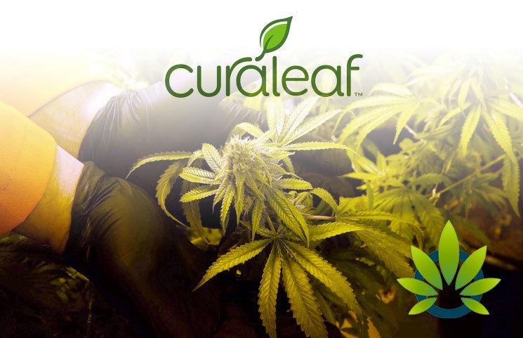Marijuana Lobbyists Going Strong for Federal Cannabis Reform Thanks to Curaleaf, Surterra