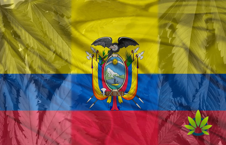 Medicinal Cannabis Is Now Approved for Use and Growing in Ecuador