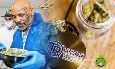 Mike Tyson, the Most Famous Cannabis Celebrity, Sees Scammers Latch on to Tyson Ranch Products