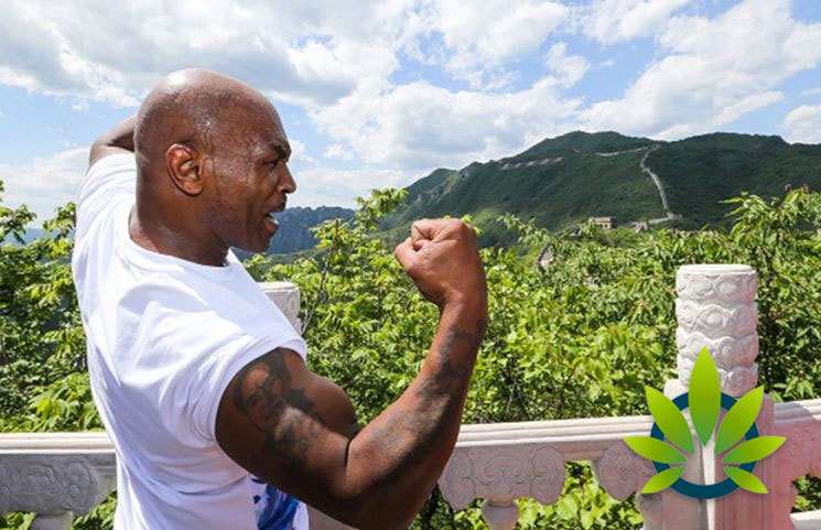 Mike Tyson's Marijuana Passion Reaches New Highs, Aims to Be the 'Face of Cannabis' in Las Vegas