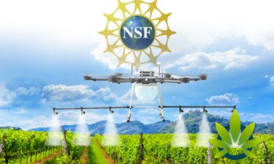 National Science Foundation Awards Grant for Marijuana Pesticide Removal Research to Brooklyn Bioscience