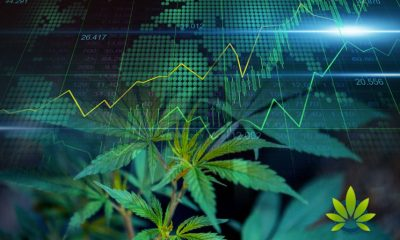 New Acosta Research: CBD Market to Hit $20 Billion by 2024, Provides Consumer Stats