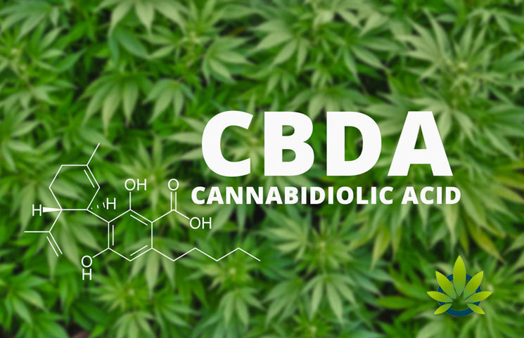 New Cannabidiolic Acid (CBDA) Research Reveals More Potent CBD Compound from Live Cannabis Plants