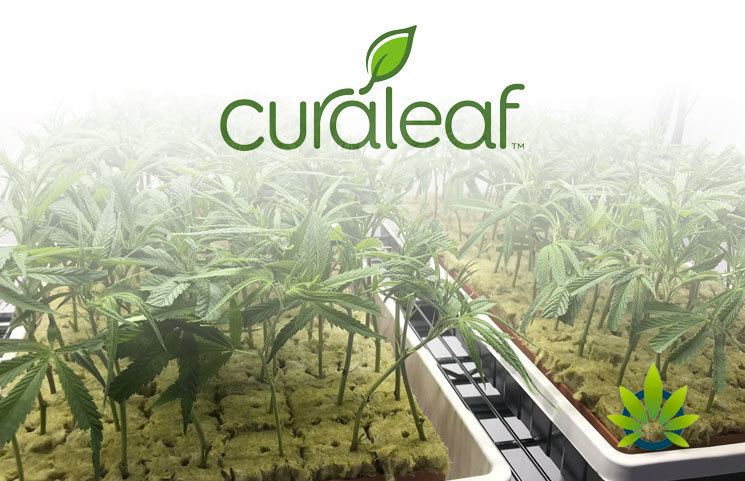 New Curaleaf Ground Flower Pods of Medical Cannabis Debut in New York
