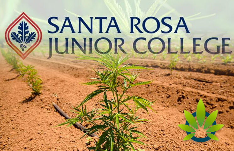 New Hemp Agriculture Cultivation Program to Open at Santa Rosa Junior College