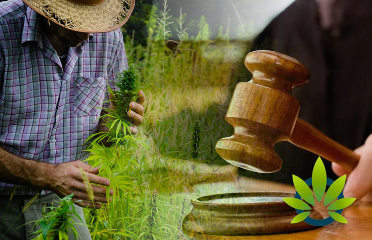 Oregon Vineyard Gets Permission to Establish Legal Authority and Sue Cannabis Grow Operation