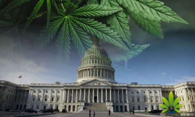 Over 20 State Attorney Generals Say State Marijuana Policies Need Protection from Federal Govt.